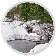 Moose In Alaska Round Beach Towel