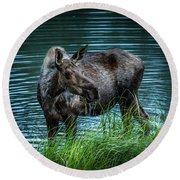 Moose In The Water Round Beach Towel