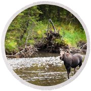 Moose In Yellowstone National Park   Round Beach Towel