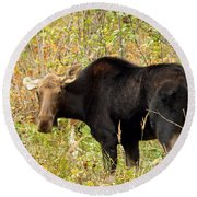 Round Beach Towel featuring the photograph Moose by James Peterson
