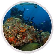 Moray Reef Round Beach Towel by Carey Chen