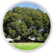 Moreton Fig Tree In Santa Barbara Round Beach Towel