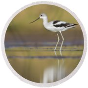 Round Beach Towel featuring the photograph Morning Avocet by Bryan Keil
