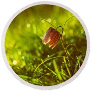 Round Beach Towel featuring the photograph Morning Beauty by Davorin Mance