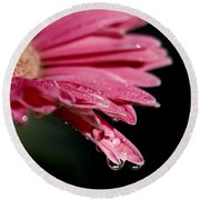 Round Beach Towel featuring the photograph Morning Dew by Joe Schofield