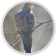 Mourning Dove Round Beach Towel by Richard Bryce and Family