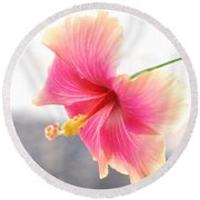 Morning Hibiscus In Gentle Light - Square Macro Round Beach Towel by Connie Fox