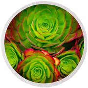 Morro Bay Echeveria Round Beach Towel