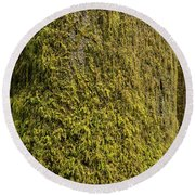 Moss Covered Tree Olympic National Park Round Beach Towel