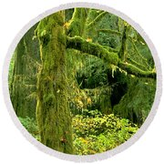 Round Beach Towel featuring the photograph Moss Draped Big Leaf Maple California by Dave Welling