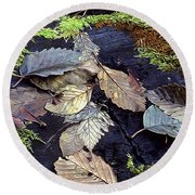 Mossy Stump Round Beach Towel