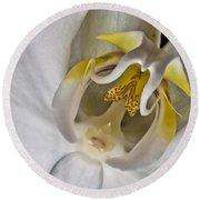 Moth Orchid Inverted Round Beach Towel