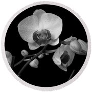 Moth Orchids Round Beach Towel