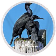 Round Beach Towel featuring the photograph Mother And Baby Brandt's Cormorants by Susan Wiedmann