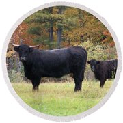 Round Beach Towel featuring the photograph Highland Cattle  by Eunice Miller