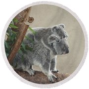 Mother And Child Koalas Round Beach Towel by John Telfer