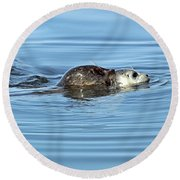 Round Beach Towel featuring the photograph Mother Harbor Seal And Pup by Susan Wiedmann