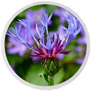 Mountain Cornflower Close Up Round Beach Towel