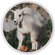 Mountain Goat Kid Standing On A Boulder Round Beach Towel