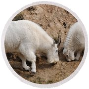 Mountain Goats At The Salt Lick Round Beach Towel by Vivian Christopher