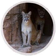Round Beach Towel featuring the photograph Mountain Lion 1 by Arterra Picture Library