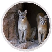 Round Beach Towel featuring the photograph Mountain Lion 2 by Arterra Picture Library
