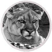 Mountain Lion Bergen County Zoo Round Beach Towel