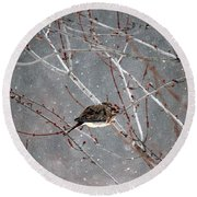 Mourning Dove Asleep In Snowfall Round Beach Towel