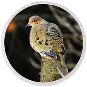 Mourning Dove On Post Round Beach Towel by MTBobbins Photography
