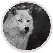 Mr. Arctic Wolf.. Round Beach Towel