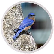 Round Beach Towel featuring the photograph Mr Bluebird by Carol  Bradley