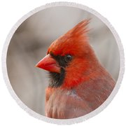 Mr Cardinal Portrait Round Beach Towel by Mircea Costina Photography