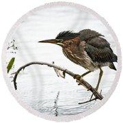 Mr. Green Heron Round Beach Towel by Cheryl Baxter