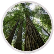 Muir Woods I Round Beach Towel