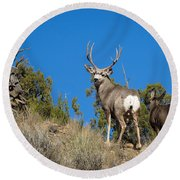 Round Beach Towel featuring the photograph Mule Deer Buck by Michael Chatt