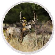 Mule Deer I Round Beach Towel