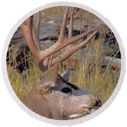 Round Beach Towel featuring the photograph Mule Deer by Lynn Sprowl
