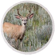 Round Beach Towel featuring the photograph Mule Deer by Michael Chatt