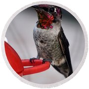 Round Beach Towel featuring the photograph Multi Colored Hummingbird Male Anna by Jay Milo