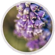 Round Beach Towel featuring the photograph Muscari by Caitlyn  Grasso