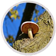 Round Beach Towel featuring the photograph Mushroom In A Tree by Ally  White