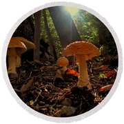 Round Beach Towel featuring the photograph Mushroom Morning by GJ Blackman