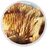 Mushrooms By Jan Marvin Round Beach Towel