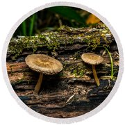 Mushrooms In The Forest Round Beach Towel