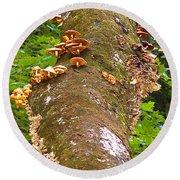 Mushroom's Kingdom Round Beach Towel