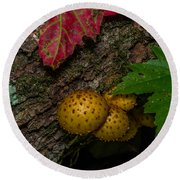Mushrooms On The Forest Floor Round Beach Towel