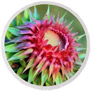 Round Beach Towel featuring the photograph Musk Thistle by Teresa Zieba