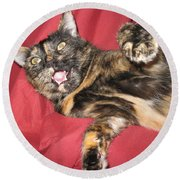 My Funny Cat Round Beach Towel
