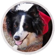 Round Beach Towel featuring the photograph Female Border Collie by Eunice Miller