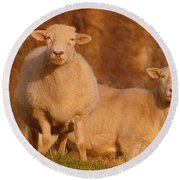 Round Beach Towel featuring the photograph My Sheep ...   by Lydia Holly